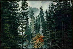 Der Wald Arus